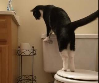 Man-investigating-high-water-bill-discovers-cat-flushing-the-toilet.jpg