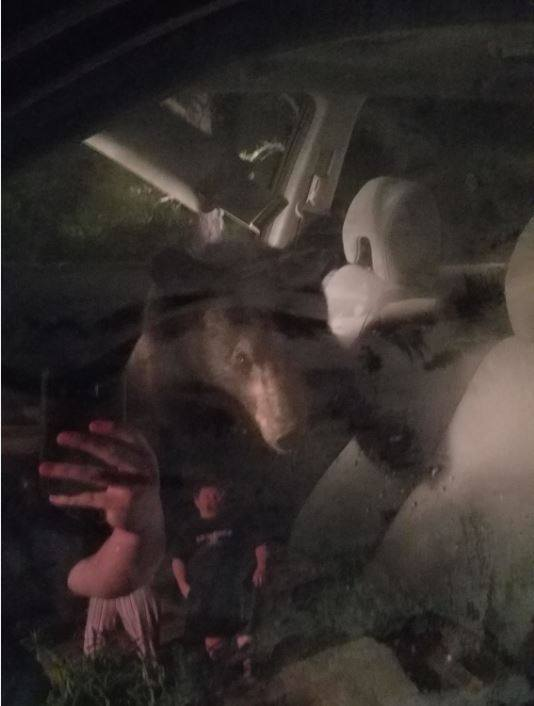 a bear in the car.jpg