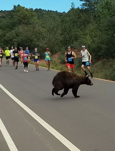 bear in running race.jpg