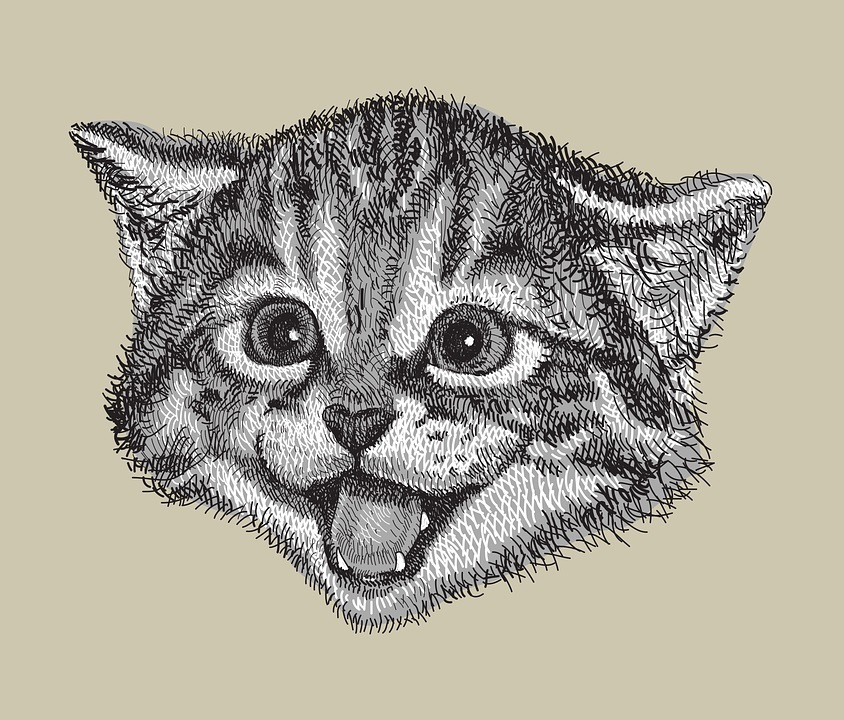 drawing kitten.jpg