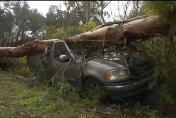 two vehicles crushed by different trees in different cities on same day.jpg