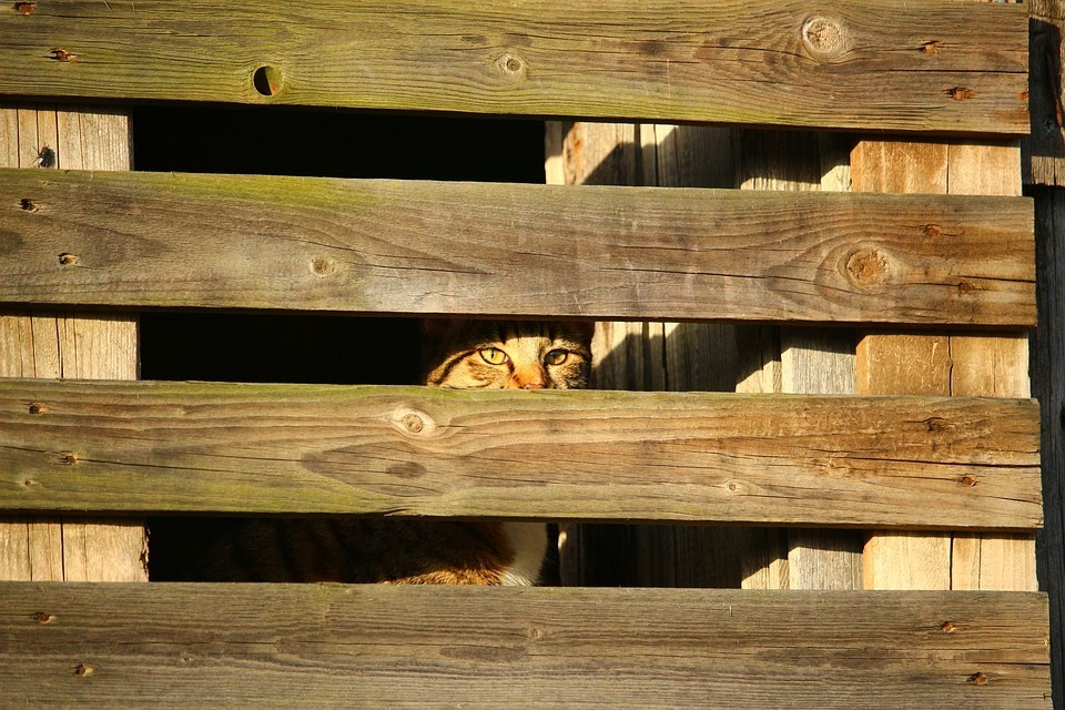 cat-inside the wood.jpg