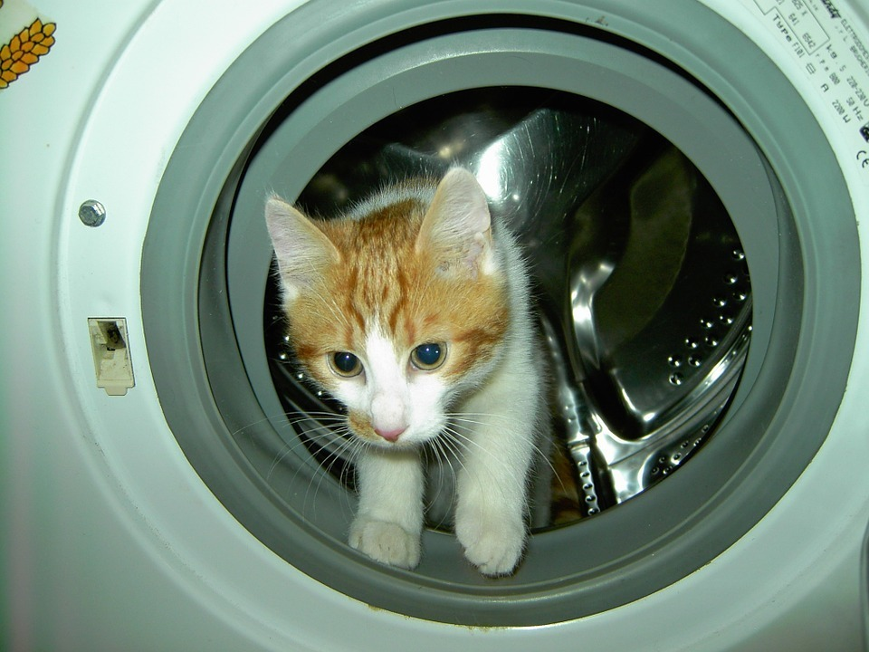 cat-laundry-machine.jpg