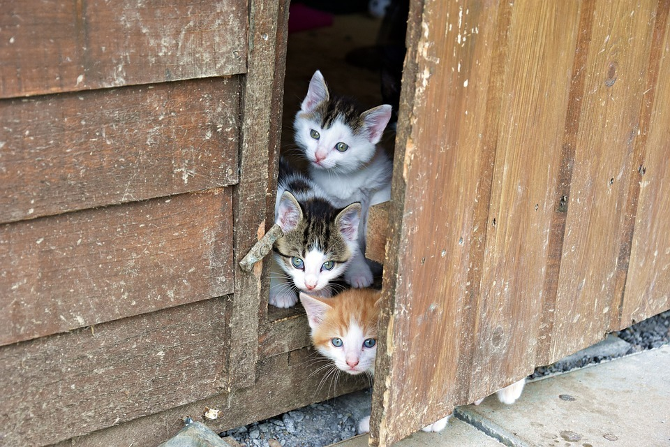 three-kittens.jpg